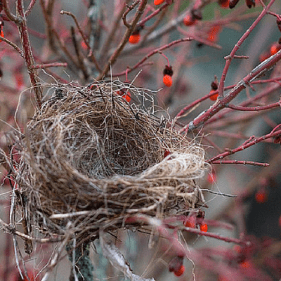 Is Empty Nest Syndrome an Overblown Problem?