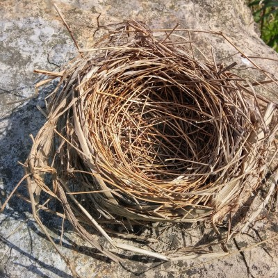 10 Steps To Take As You Face Your Empty Nest