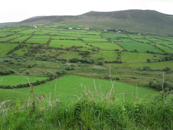 Greeen Irish landscape on the Ring of Kerry