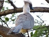 06-12 go-away bird (1024x768)
