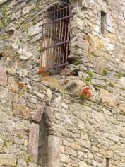 Flowers on Fethard Castle