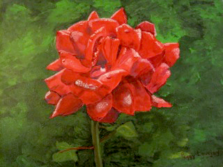 Red rose on green background.