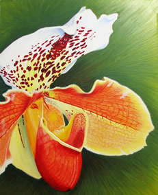 Orange and white orchid flower on green background.