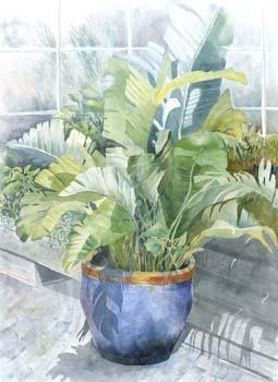 Large green split leave plant in blue pot.