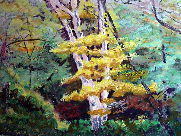 White birch tree with yellow leaves in the woods.