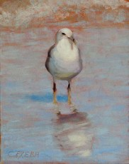 Portrait of a seagull standing on the wet beach sand.