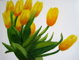 Yellow tulips on white background.