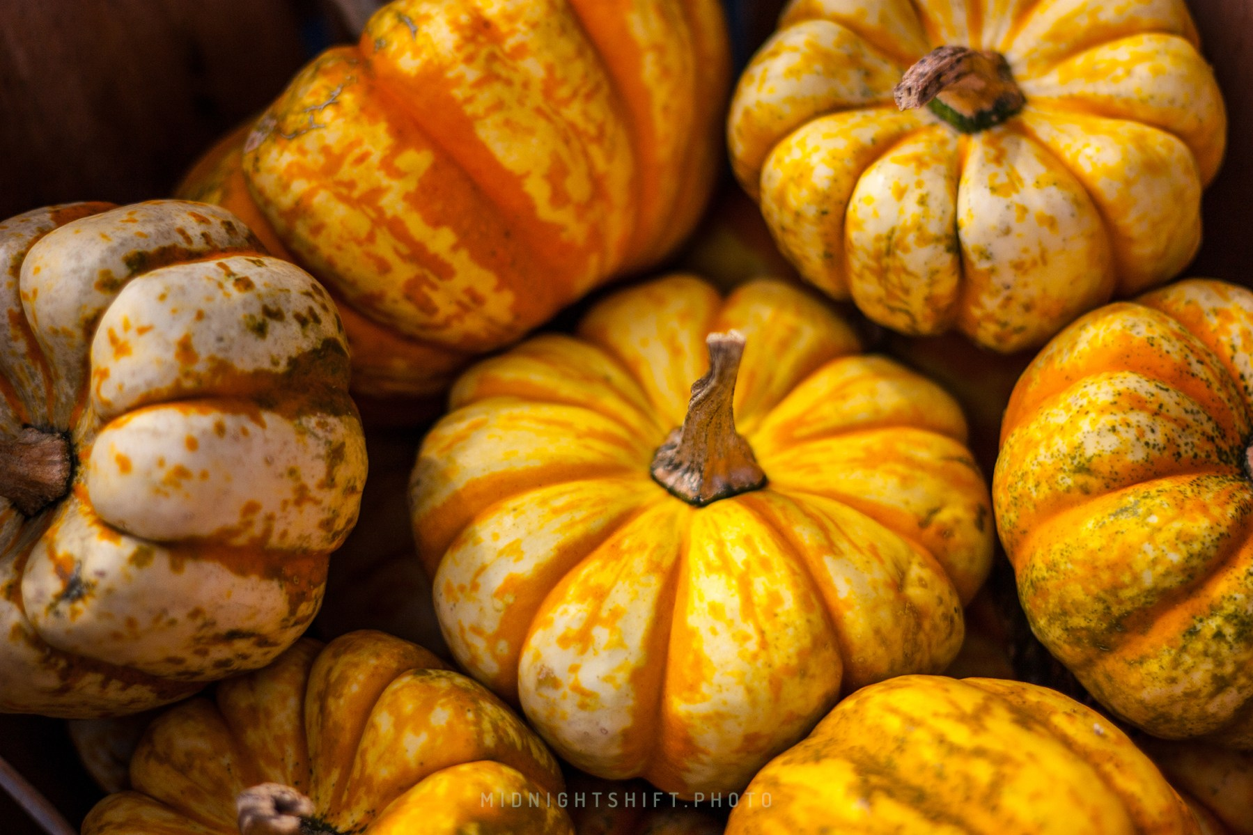 A pile of gourds in acushnet, massachusetts