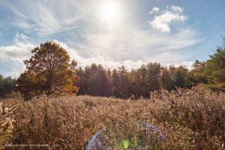A dramatic field in autumn. Mattapoisett Massachusetts