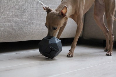 Leckerli Ball The Odin Hundeblog miDoggy