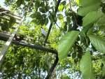 ブナ林の中のソーラーパネル