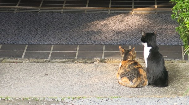 These two seem to be waiting patiently for someone to give them food. They look normal-sized too compared to the cats I saw in Himeji^^