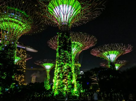 Enjoying the supertrees' light and music show. Supertrees are super in many ways. Some are equipped with solar cells which in turn power the supertrees' lighting, and there are trees used to help ventilate the conservatories.