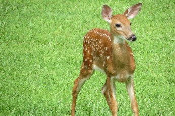 wildlife removal piedmont triad