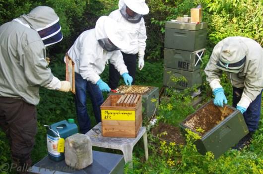 Der var mange bier i familierne, så mange at ikke alle kunne være inde i stadet