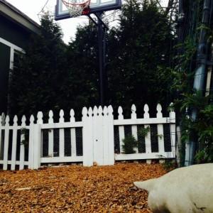 Surely a pig may look at a basketball hoop.