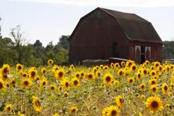 Photo courtesy of Via Verde Farm.