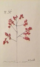 Japanese Cherry Blossom, Linda Sweek, Waunakee, WI