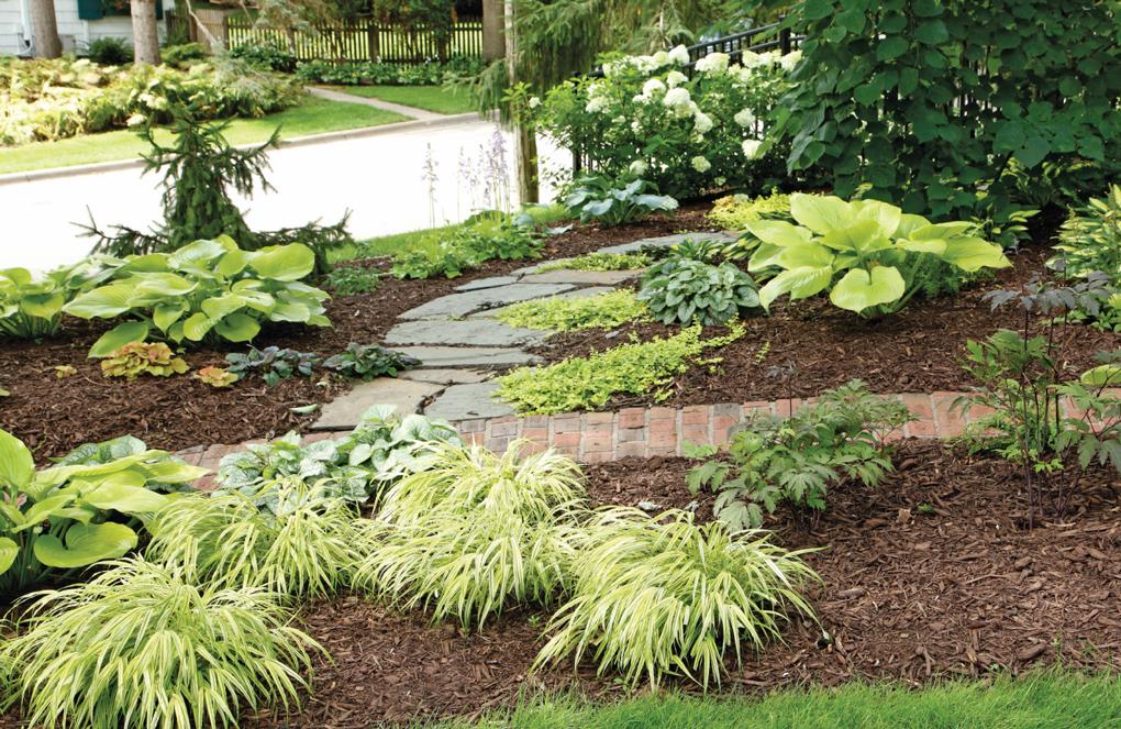 Outdoors_Garden_Plants-Walkway