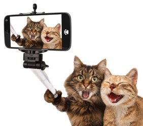 Funny cats - Self picture. Selfie stick in his hand.