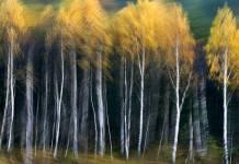 2013-09-10-wystawa-fotografii-dzikiej-przyrody@Polkowice-01