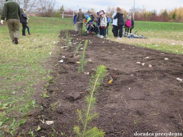 2015-11-12 W Głogowie powstaje nowy park (fot. UM Głogów)