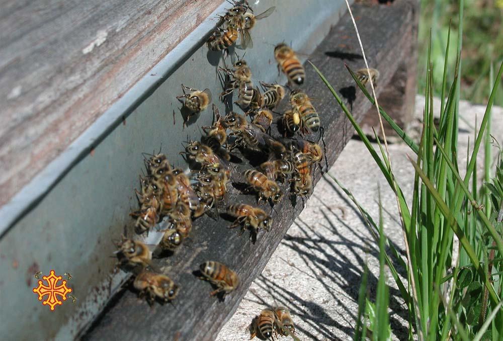 Vente de miel en ligne et de produits transformés (pain d'épices, bonbons)