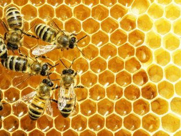 beneficii miere de albine
