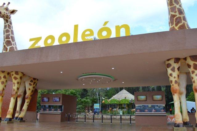 ¡Ya puedes VISITAR el  Zoológico de León caminando!
