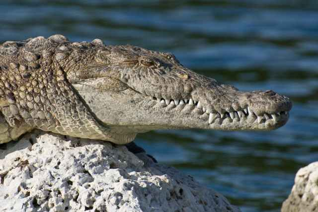 Adolescente es atacada por un cocodrilo en Puerto Vallarta