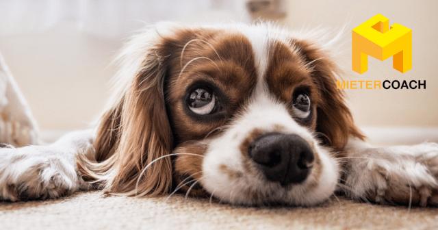 Wohnung finden mit Hund oder Katze