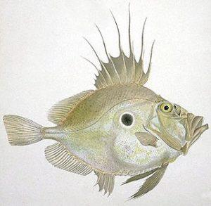 Saint Pierre poisson pecher methode mer
