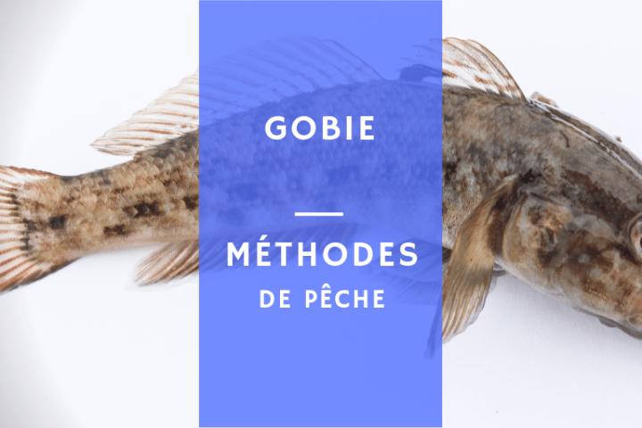 pêcher le poisson gobie en eau douce ou en bord de mer