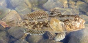 pêche du Gobie dans les flaques pour les enfants