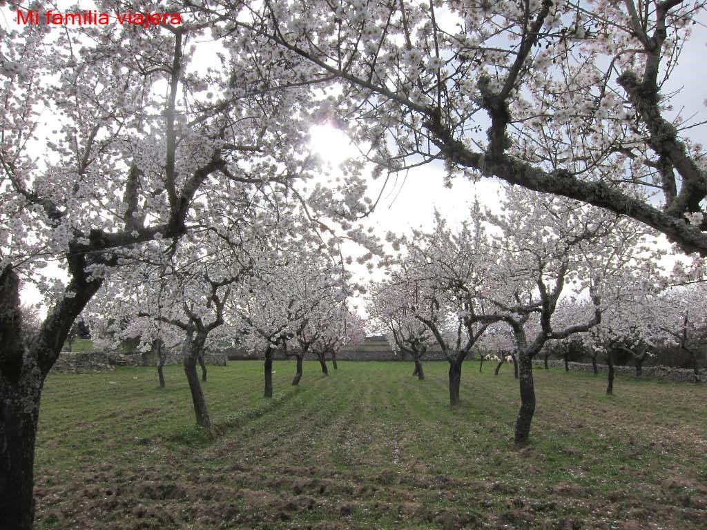 Senda mirador del Molinillo (primavera)