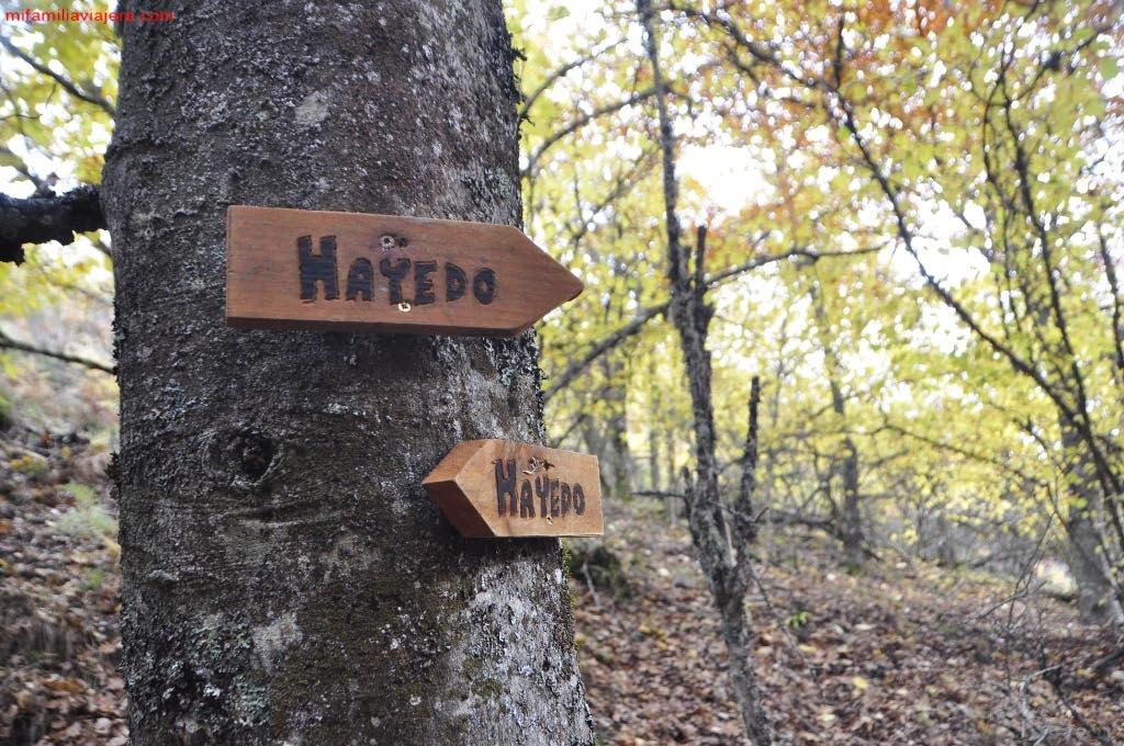 Señalización del recorrido por el Hayedo de la Boyariza