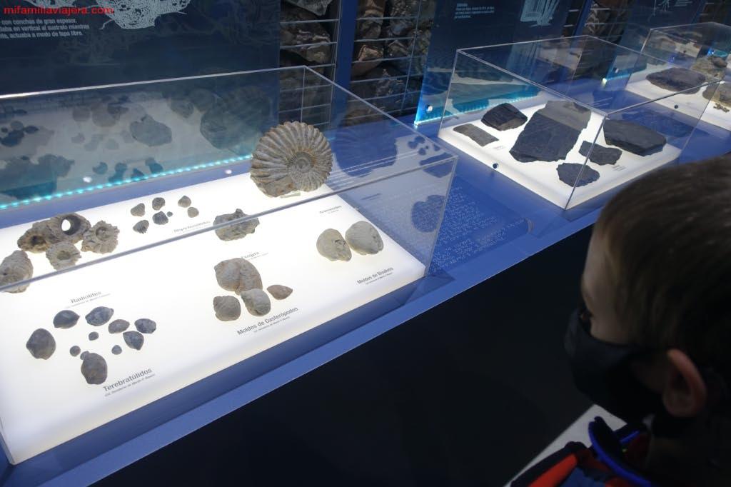 Exposición de icnofósiles