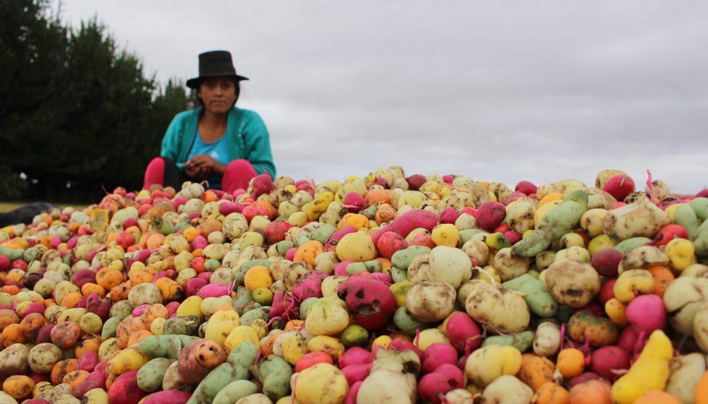 Conoces acerca la Pérdida y el Desperdicio de Alimentos? | Miga