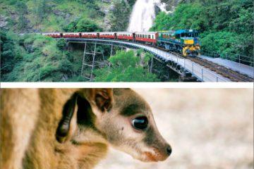 キュランダ列車+大自然動物探検ツアー(星空観測+オージーBBQ)【ケアンズツアーのことならジェイさんツアー】