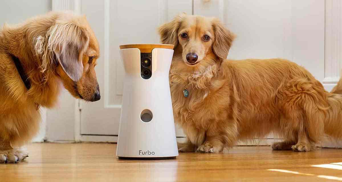 Furbo Dog Camera Uk