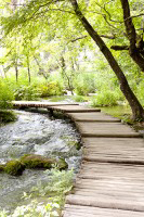 beautiful pathway - A path for your prospect