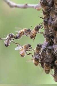 bees - Connections
