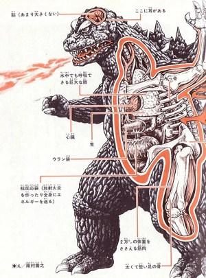 Kaiju Anatomical Drawings  MightyMega