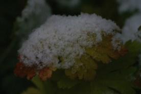 Snowy Crown