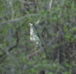 Mystery Heron C/U