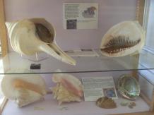 Des restes de mollusque