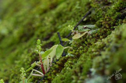 Curso-Reptiles-y-Anfibios-de-Andalucia-5