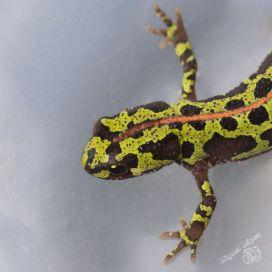 Curso-Reptiles-y-Anfibios-de-Andalucia-6