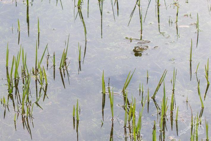 Curso-Reptiles-y-Anfibios-de-Andalucia-9