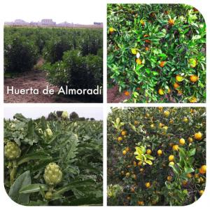 Huerta de Almoradí. Fuente: el Autor.